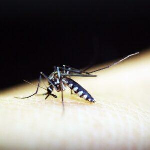 malaria travel health